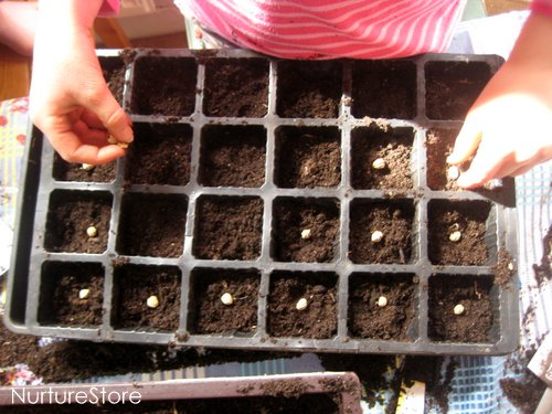 how to grow seeds