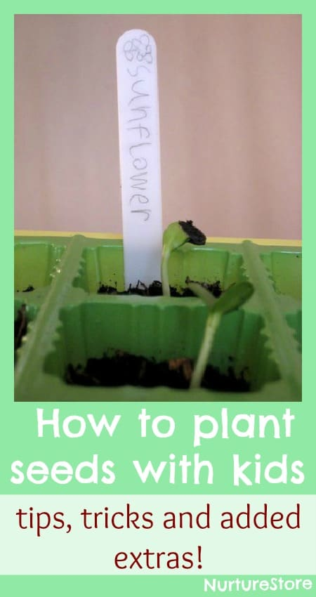how to plant seeds with kids