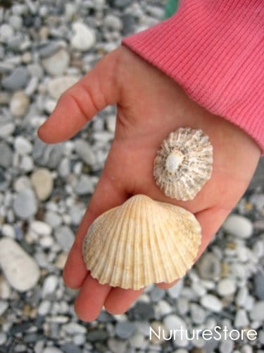 shell playdough