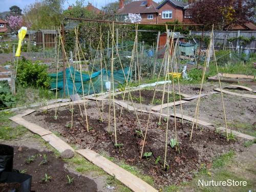 Garden activities for april the garden classroom for Gardening jobs for april