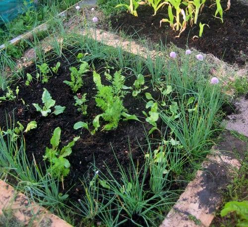 garden mulch in may