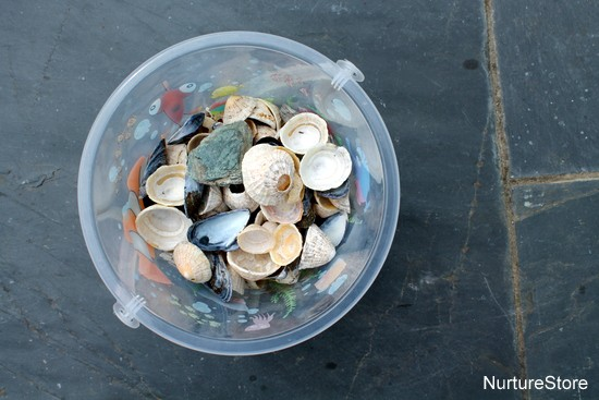 art using shells