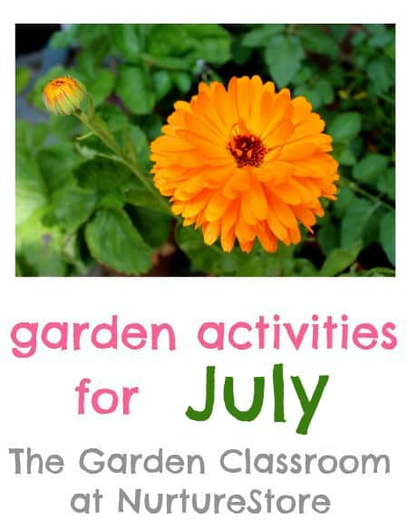 Garden activities for July : what to grow, what to harvest, and lots of kids activities