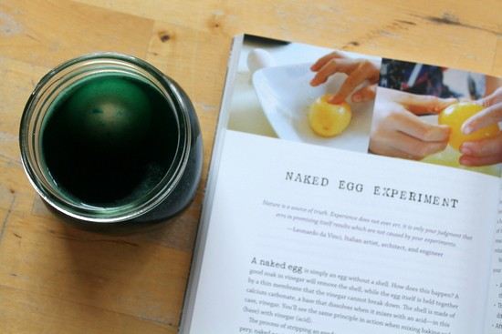naked egg experiment for kids