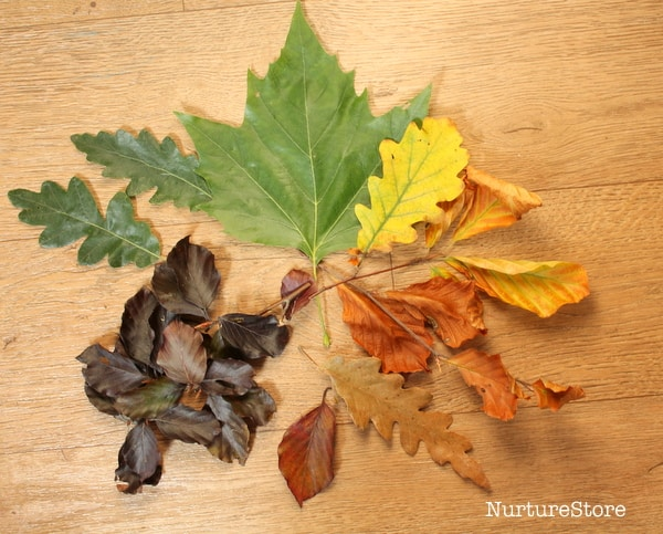autumn leaves crafts