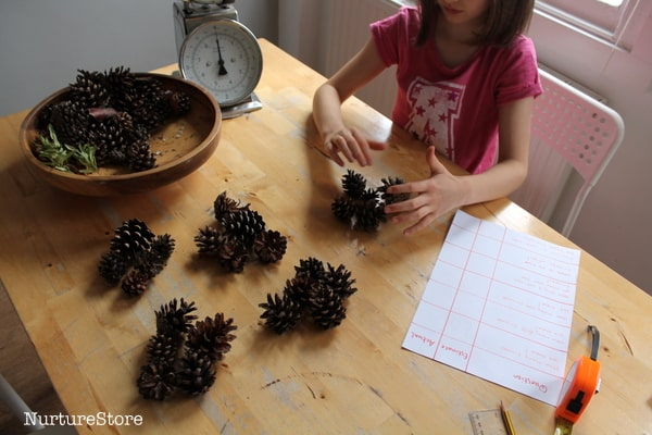 counting with pine cones math