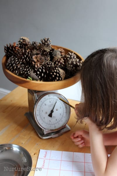 weighing math station with pine cones