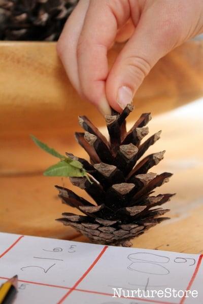 Pine cone math station  NurtureStore