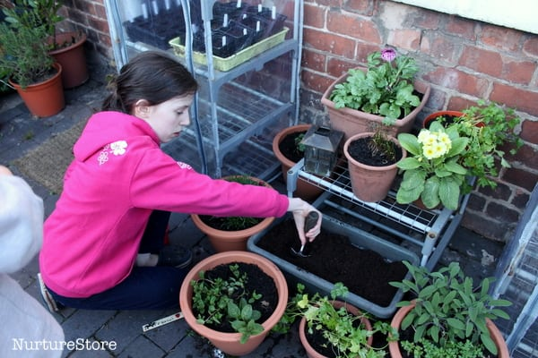 how to plant strawberries in containers