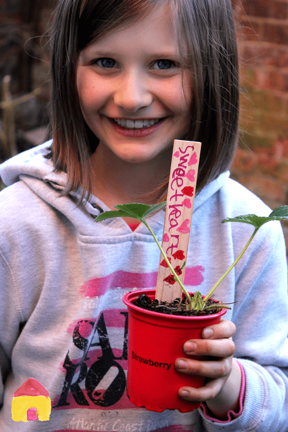 how to grow strawberries in containers - kids gardening