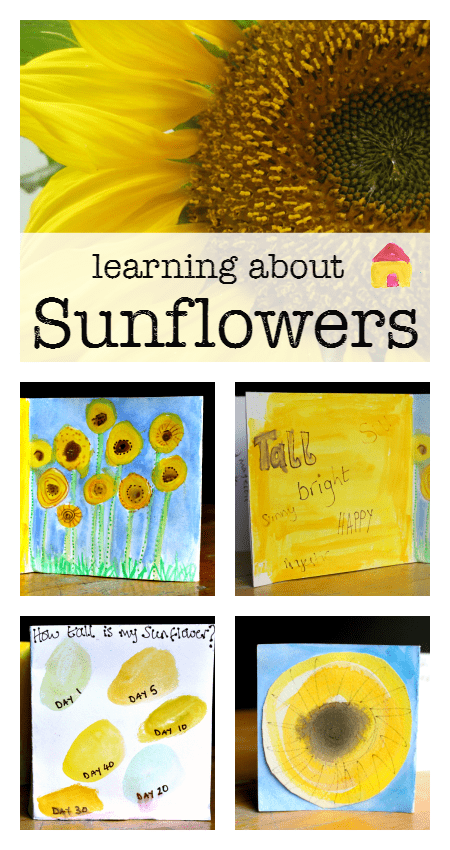 learning about sunflowers activities :: sunflower unit :: summer nature study