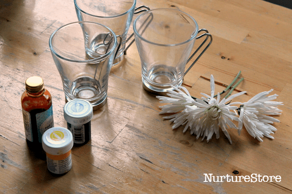 science experiment with flowers