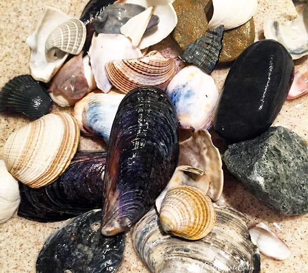 math center using shells