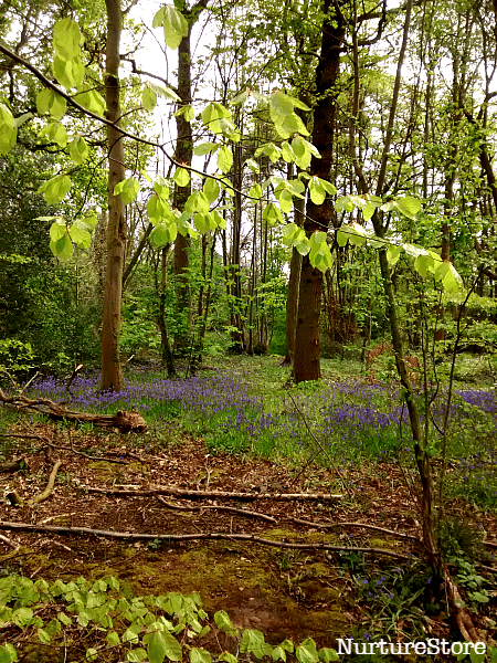 bluebell wood craft