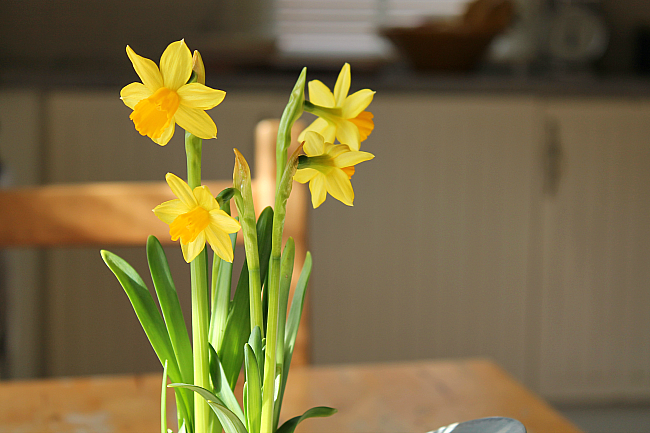 daffodil unit spring lesson plans