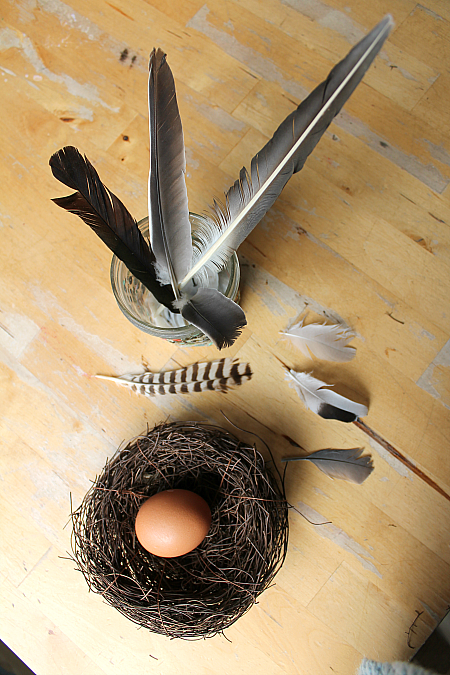 feathers and egg