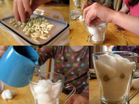 easy seed experiment for children