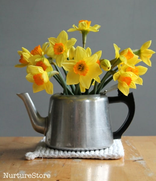 daffodils in kettle