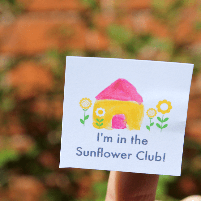 sunflower growing club