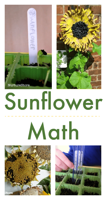 sunflower math activities printables, sunflower height chart