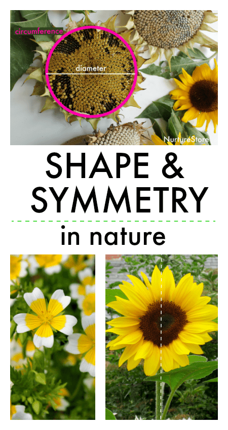 shape and symmetry in nature lesson, nature symmetry lesson plan, types of symmetry in flowers