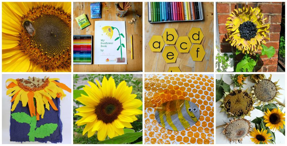 sunflower lesson plans for children