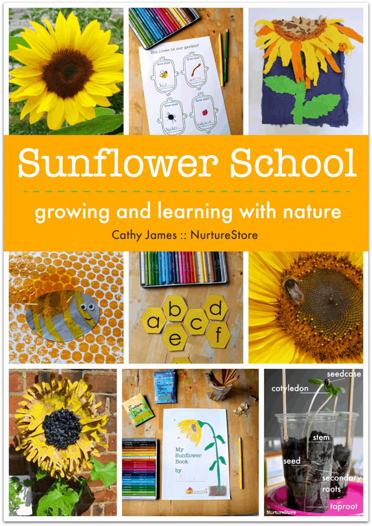 Sunflower activities for children. how to grow sunflowers, school gardening club activities