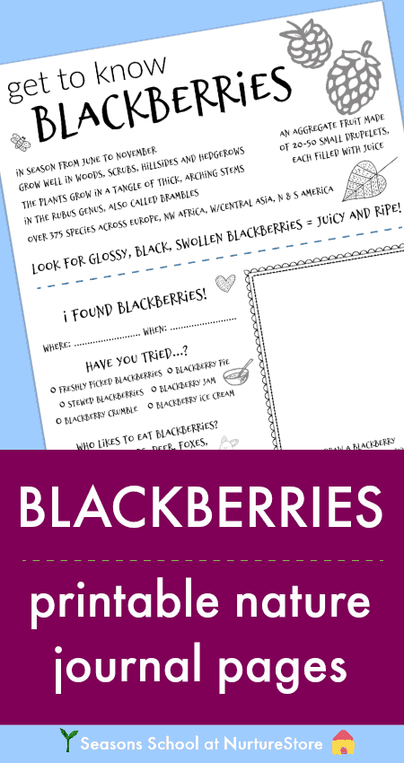 image relating to Printable Guide identify Blackberry choosing expert for young children - printable - NurtureStore