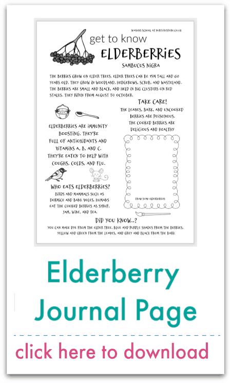 elderberry journal page