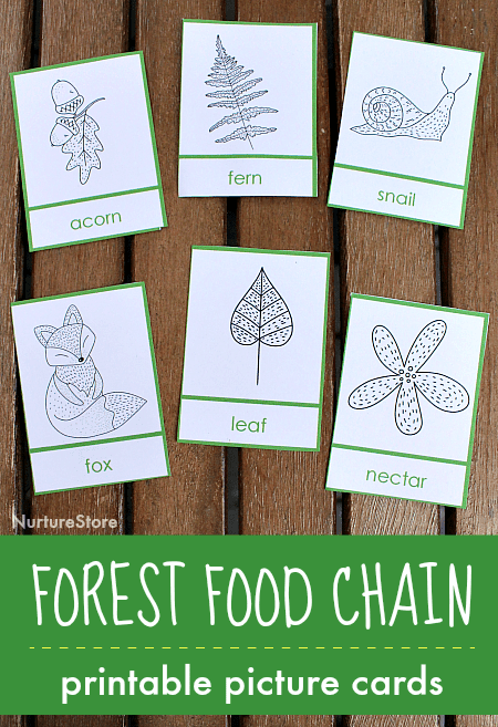 picture regarding Food Chain Printable titled Deciduous forest food items chain lesson printables - NurtureStore